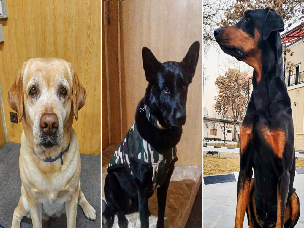 Berita di India 2021: Anjing ITBP dan Tentara India